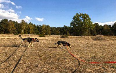 Aus dem Alltag eines Hundebesitzers – Hundetalk #01